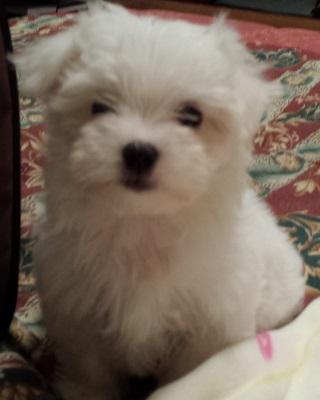 Foto di cani e gatti nomi per cuccioli for Nomi per cani maschi piccoli