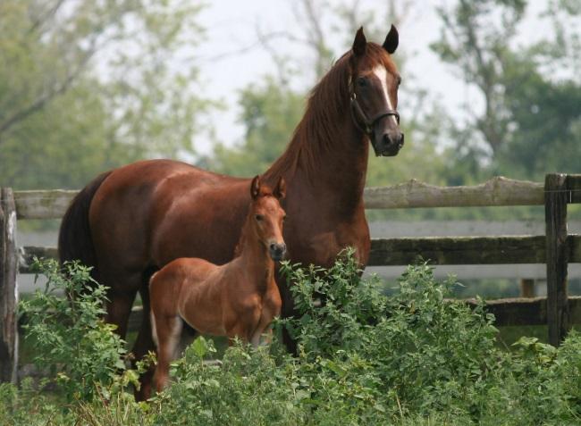 Nomi per cavalli come chiamare il tuo cavallo - Immagini di marmellata di animali a colori ...
