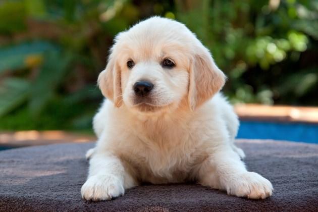 Nomi Per Cani Guida Su Come Chiamare Fido