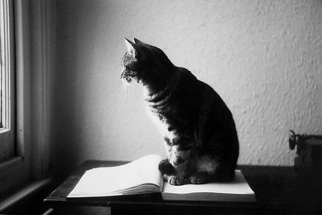Il Nome Dei Gatti