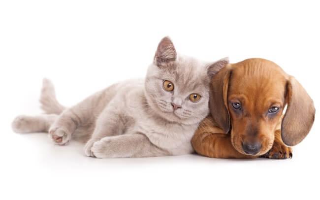 Nomi Per Cani E Gatti