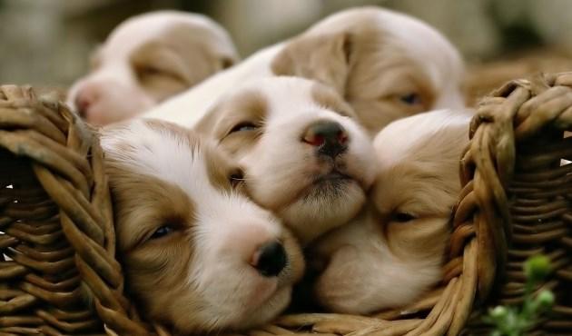 nomi per cani come chiamare il tuo cucciolo